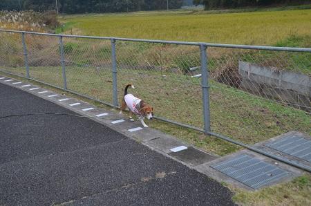 20151202松崎台公園10
