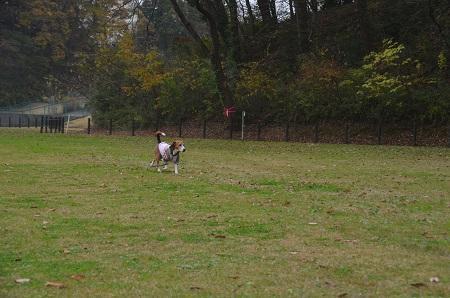 20151202松崎台公園16
