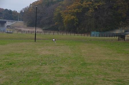 20151202松崎台公園14