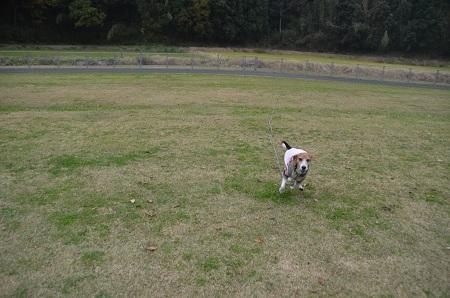 20151202松崎台公園23