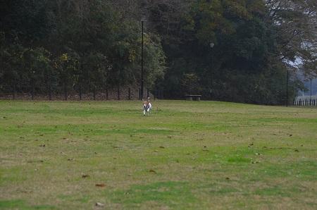 20151202松崎台公園24