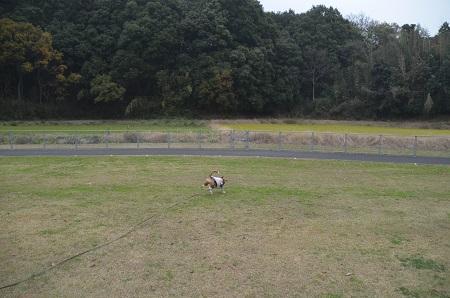 20151202松崎台公園20