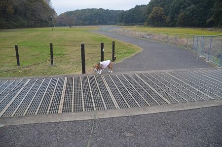 20151202松崎台公園29