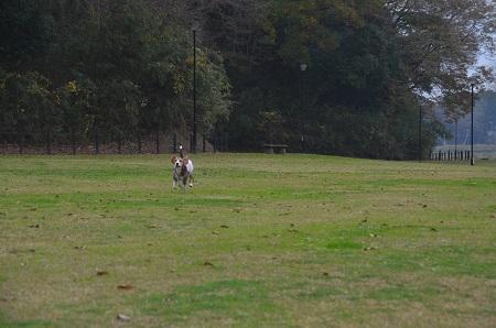 20151202松崎台公園25