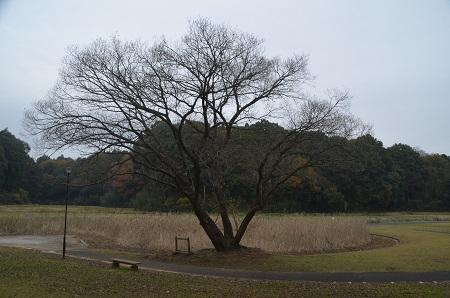 20151202松崎台公園37
