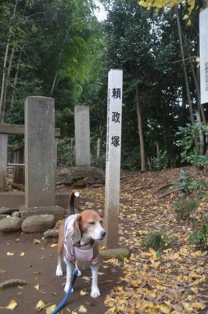 20151202頼政塚と馬見塚06
