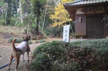 20151202頼政塚と馬見塚04