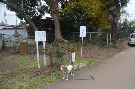 20151202頼政塚と馬見塚19