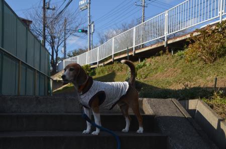 20151207桜城城址公園01