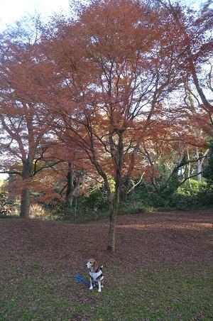 20151207桜城城址公園12