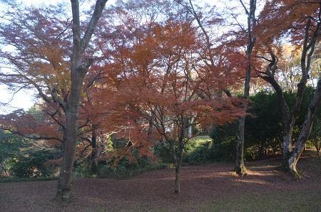 20151207桜城城址公園11