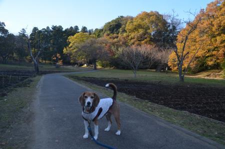 20151207桜城城址公園07