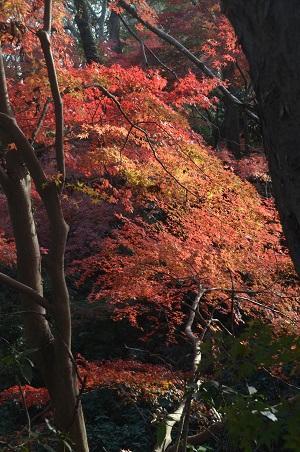 20151207桜城城址公園18