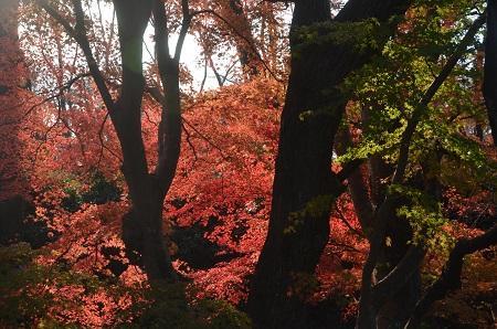 20151207桜城城址公園17