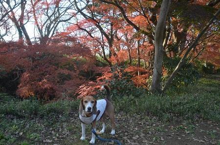 20151207桜城城址公園16