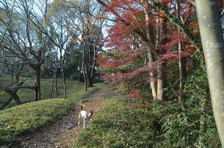 20151207桜城城址公園24