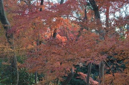 20151207桜城城址公園23