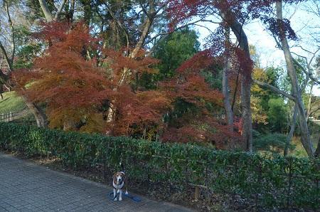 20151207桜城城址公園22