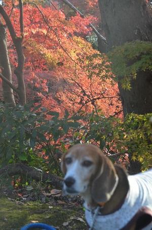 20151207桜城城址公園20