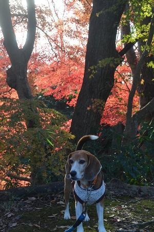 20151207桜城城址公園19
