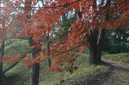 20151207桜城城址公園25