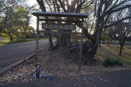 20151207桜城城址公園36