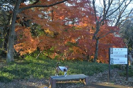 20151207桜城城址公園35