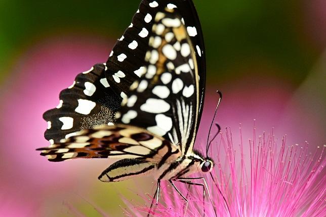 季節の花とチョウ(4)