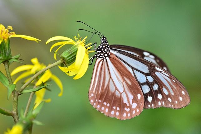 季節の花とチョウ(2)