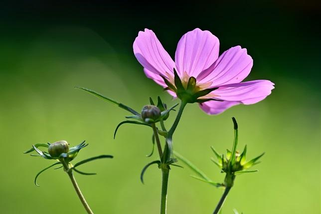 花より蝶(1)