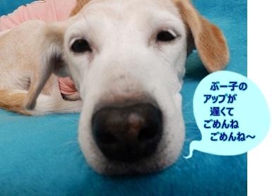 15_10_31_00.jpg