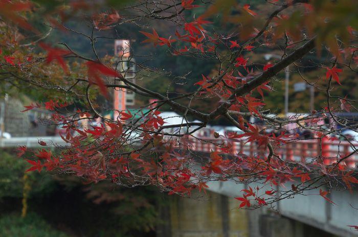 2015-11-9-1永源寺ライトアップ1