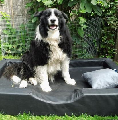 doggybed_visco_compact2.png