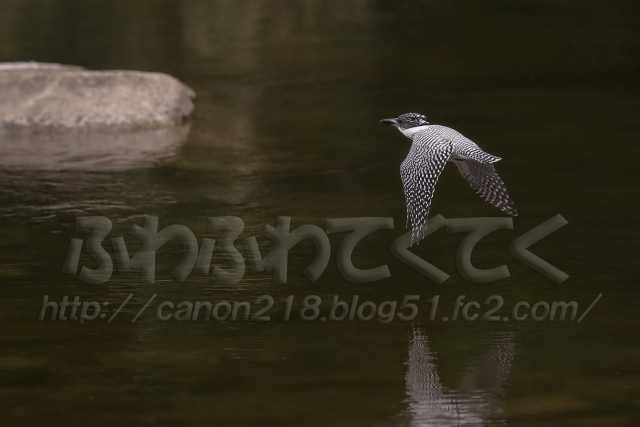 1DX_2695LR_1510.jpg