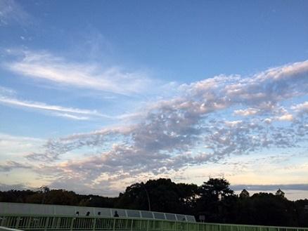 11 16 うろこ雲