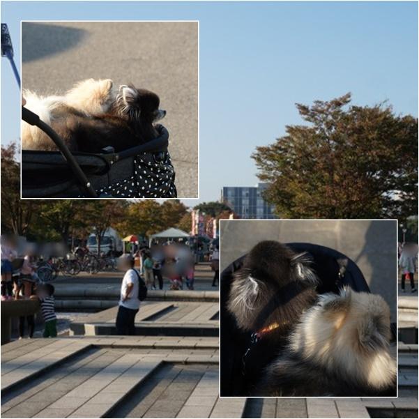 公園さんぽ17 15-11