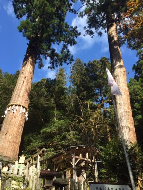 由岐神社からの大木