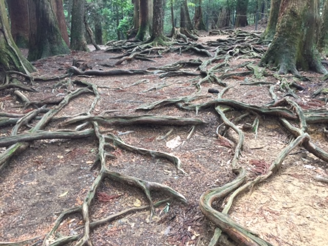 木の根道拡大
