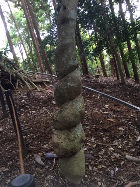 磁場のゆがみにねじれる木