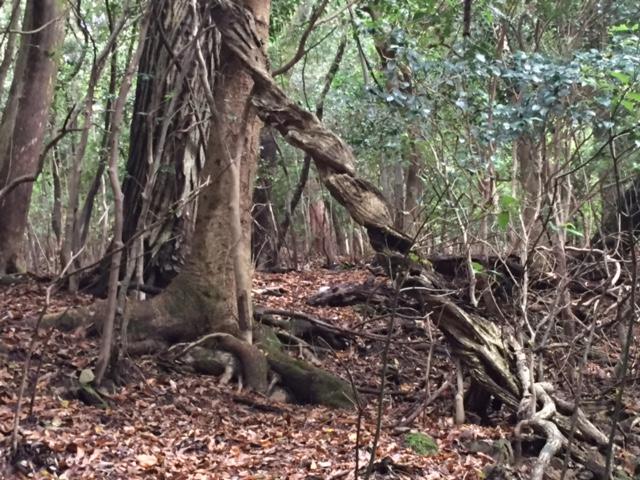 磁場のゆがみにねじれる木2