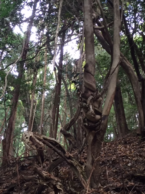 磁場のゆがみにねじれる木3