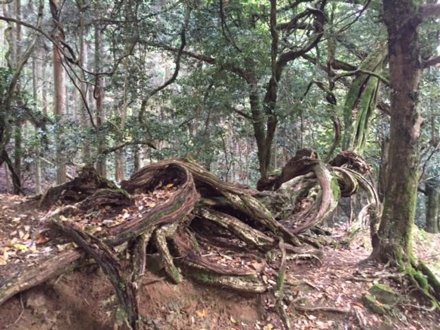 磁場のゆがみにねじれる木4