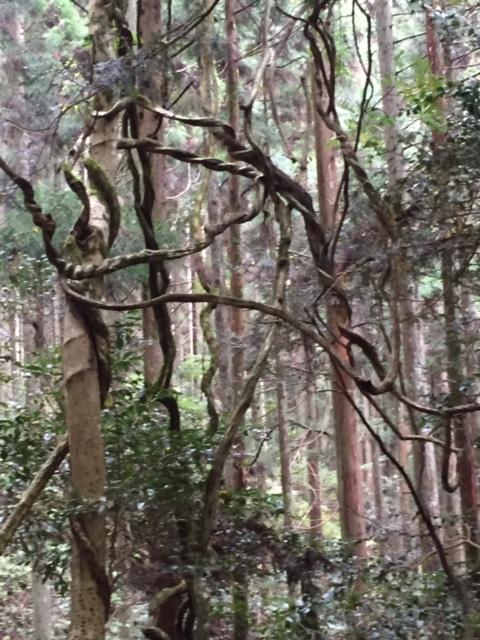 磁場のゆがみにねじれる木5