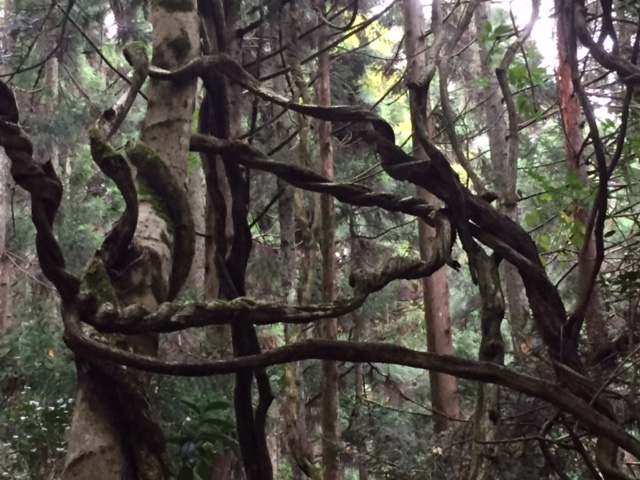 磁場のゆがみにねじれる木6