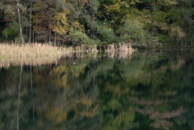 笹原池の秋 2015 (2)