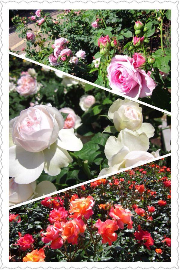 rblog-20140529152159-00.jpg