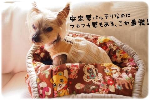 マシュマロ大活躍中 (1)