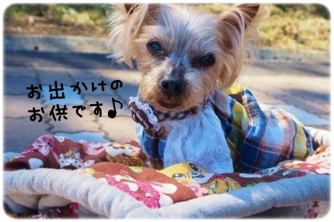 マシュマロ大活躍中 (2)
