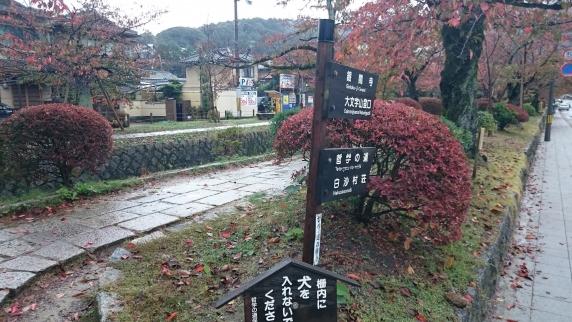 2015/11/8 哲学の道
