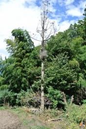2015-10-2残る枯大木